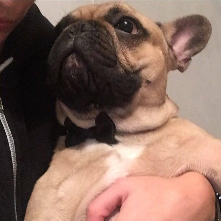 Tiberio, il cane della famiglia Bucchi